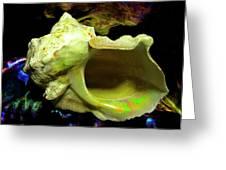 Green Turban Seashell Greeting Card