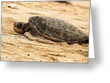 Green Turtle 3 Greeting Card