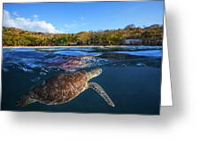 Green Turtle - Sea Turtle Greeting Card