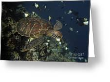 Hawksbill Turtle Greeting Card