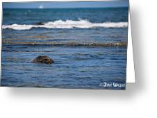 Green Turtle Surf Greeting Card