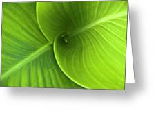 Green Twin Leaves Greeting Card