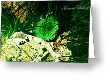 Green Urchin Greeting Card