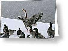 Green Valley Ducks Greeting Card