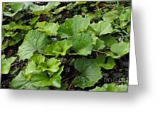 Green Vine Greeting Card