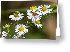 Green Wasp And Daisies Greeting Card