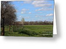 Green Wheat Field With Blue Sky Greeting Card