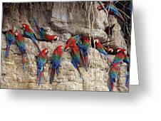 Green-winged Macaw Greeting Card