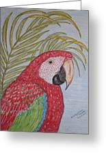 Green Winged Macaw Greeting Card