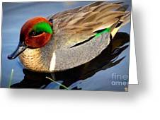 Green Winged Teal  Duck  Greeting Card