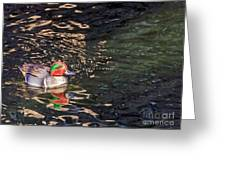 Green-winged Teal Greeting Card