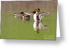 Green-winged Teals Greeting Card
