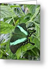 Green Wings 2 Greeting Card
