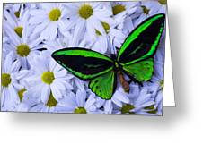 Green Wings In The Mums Greeting Card