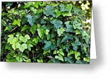 Green With Ivy Greeting Card