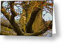 Green Woodpecker Richmond Park Greeting Card