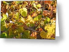 Green Yellow And Dry Leaves Greeting Card