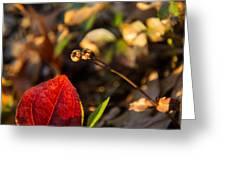 Greenbriar Leaf And Wintergreen Seedpod Greeting Card