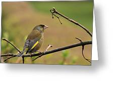 Greenfinch Greeting Card by Peter Skelton