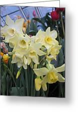 Greenhouse Daffodils Greeting Card