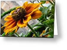 Greenhouse Daisy Greeting Card