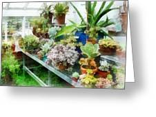 Greenhouse With Cactus Greeting Card