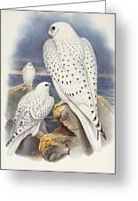 Greenland Falcon Greeting Card