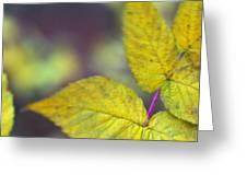 Greenleaf Greeting Card