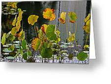 Greens On A Pond Greeting Card