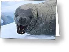 Greetings From Antarctica.. Greeting Card