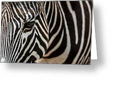 Grevy's Zebra 4 Greeting Card