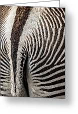 Grevy's Zebra 5 Greeting Card