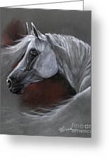 Grey Arabian Horse Soft Pastel Drawing 13 04 2013 Greeting Card