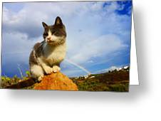Grey Cat And Rainbow Greeting Card