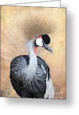 Grey Crowned Crane Greeting Card