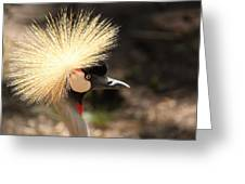 Grey Crowned Crane Greeting Card