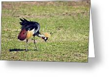 Grey Crowned Crane. The National Bird Of Uganda Greeting Card