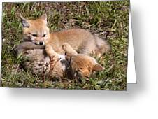 Grey Fox Kitts At Play Greeting Card