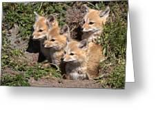 Grey Foxes At Den Greeting Card