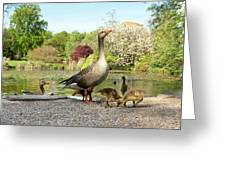 Grey Geese And Goslings Greeting Card