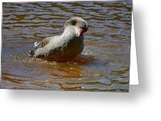 Grey Goose Greeting Card