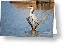 Grey Heron  Ardea Cinerea Greeting Card