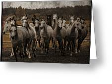 Grey Horses Greeting Card
