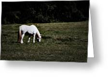 Grey In The Pasture Greeting Card