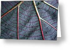 Grey Leaf With Purple Veins Greeting Card