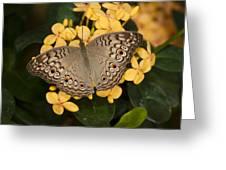 Grey Pansy Butterfly Arizona Greeting Card