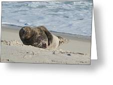 Grey Seal Pup On Beach Greeting Card