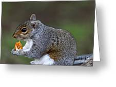 Grey Squirrel Tucking In Greeting Card