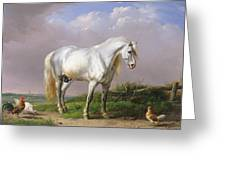 Grey Stallion Greeting Card