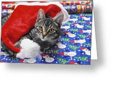 Grey Tabby Cat With Santa Claus Hat Greeting Card
